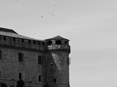 bardi - castello e rondini